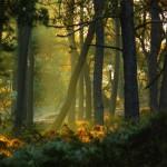 Landscape-mother-nature-23969115-850-638